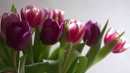 Indoor tulips by pentaxpatty at 26/01/2019 - 1:56 PM
