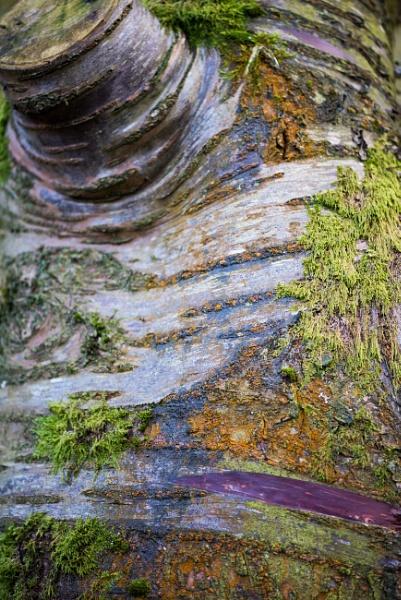 Tree bark by Danny1970