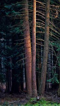 Last Light in the Dense Forest