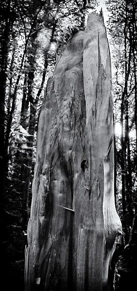 BROKEN TREE TRUNK by SOUL7