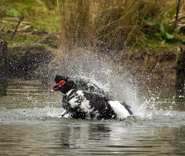 Splashing around by Madoldie