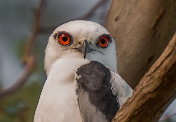 The eyes have it. by Heyneker