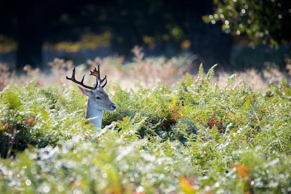 Peeky Antlers! by Bp122