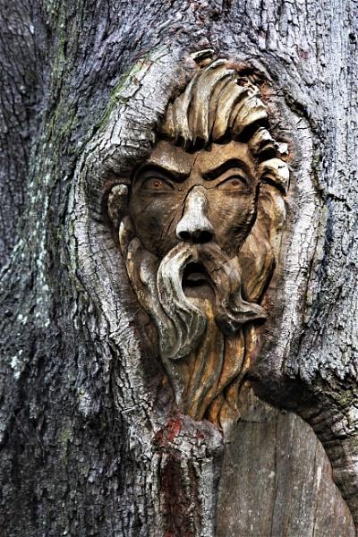 Lion Tree Spirit by SHIRLEYR