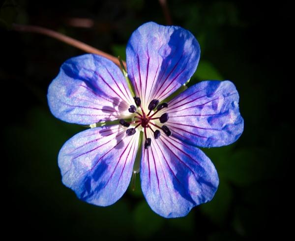 Blue Floral by adagio