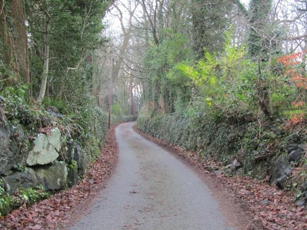 Winter Road by Carla123