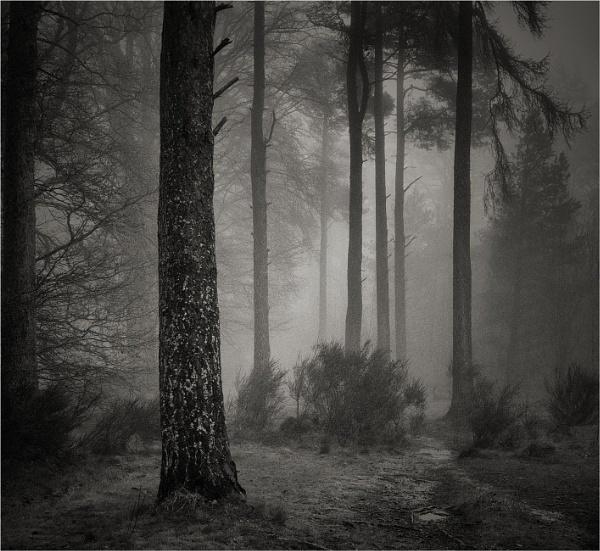 Mist & Murk by MalcolmM