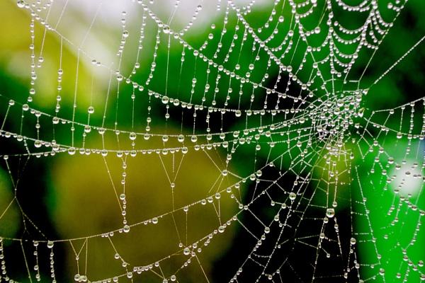 Raindrops keep falling on my Web by sandwedge