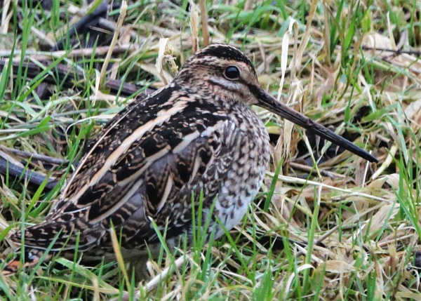 SNIPE by boxer57