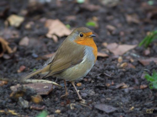 Proud Robin by xGei8ht