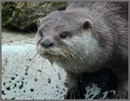 Otter taken at Hunstanton Sea Life Sanctuary