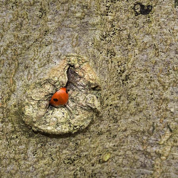 Ladybird in Hiding by Irishkate