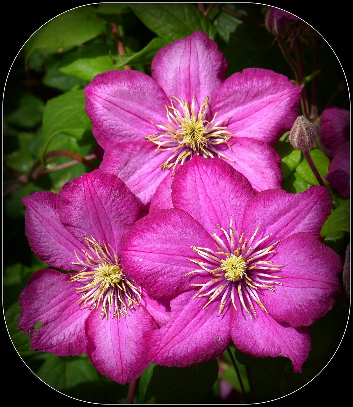 Trio of Purple Flowers