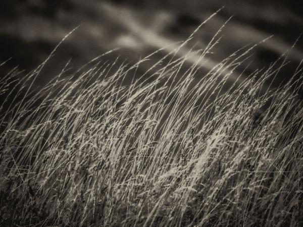 Sea Grass by Monochrome2004