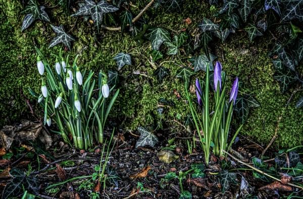 Winter flowers by BillRookery