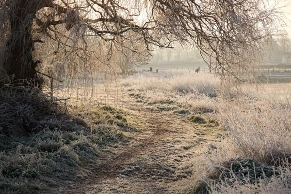 Frosty Path by alfpics