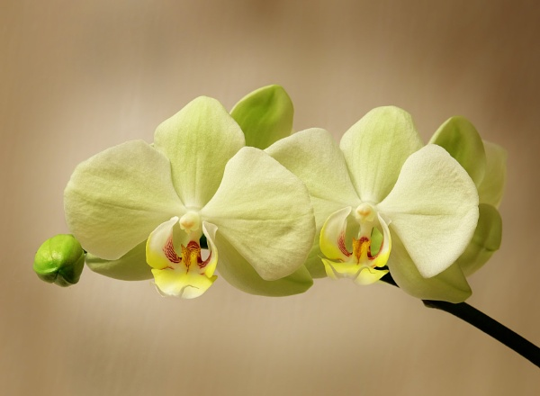 ""\""""Indoor Orchids"""". by adrianedwa""600|440|?|en|2|df3f46d1293df5c03441d7b15bf2fc45|False|UNLIKELY|0.3167922794818878