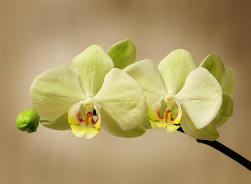 """""""Indoor Orchids""""."""