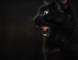 The Big Scary Beastie