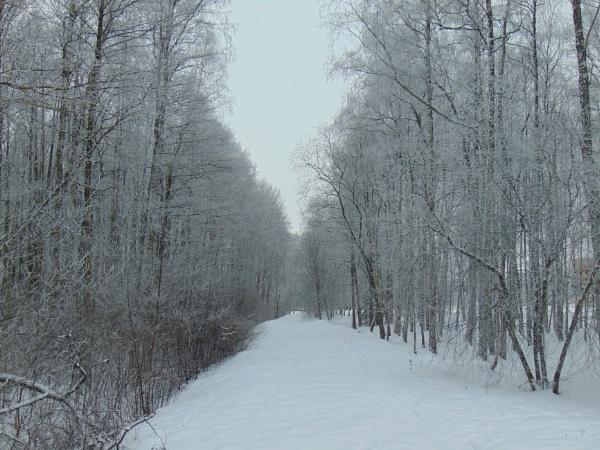 Walking in a Winter Wonderland.  by LianaMegne