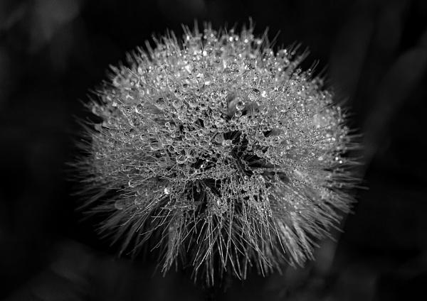 Dew by lagomorphhunter