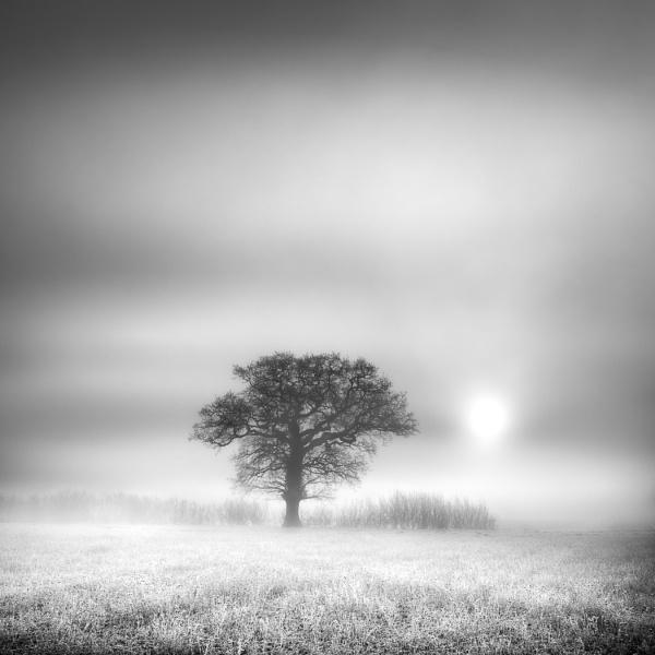 Freezing Fog by barrywebb