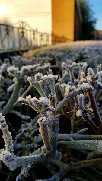 Frosty by snapperbryan06
