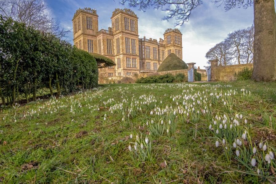 Snowdrops At Hardwick  Hall