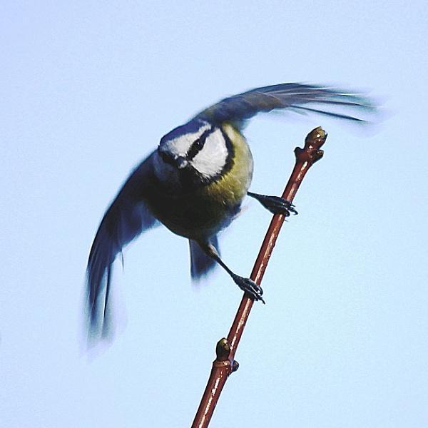 Taking off by stevept