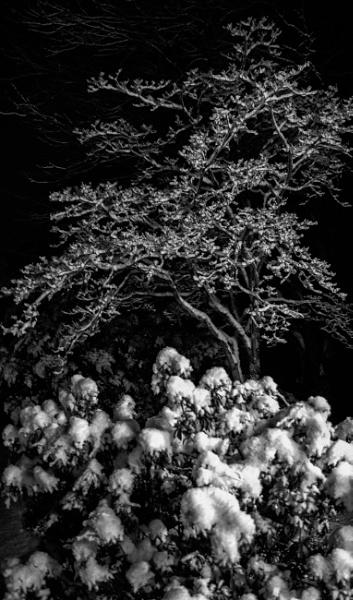 Snow Night by Merlin_k