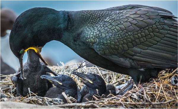 Feeding Time by mjparmy