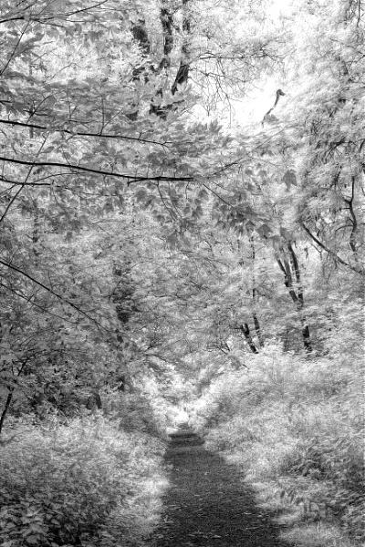 Leafy Tunnel by RLF