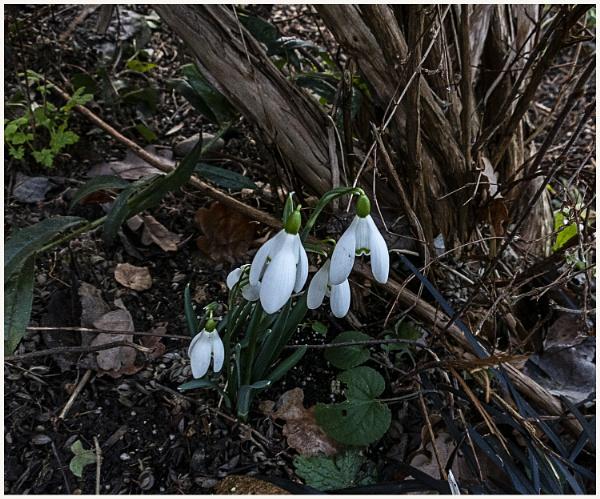 A splash of Spring by derekp