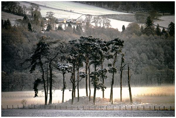 Trees in Winter by mac