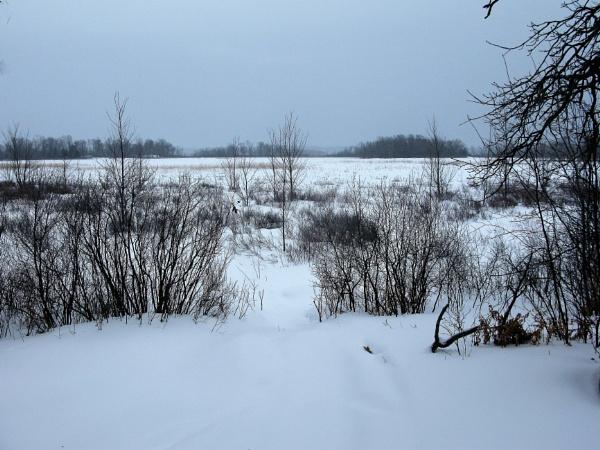 A bleak day in winter by djh698