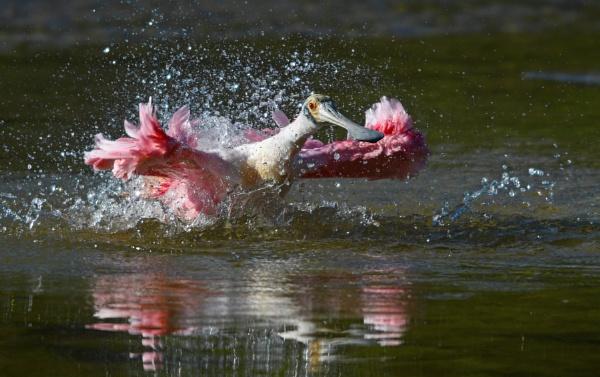 Splashing ! by jacques st-jean
