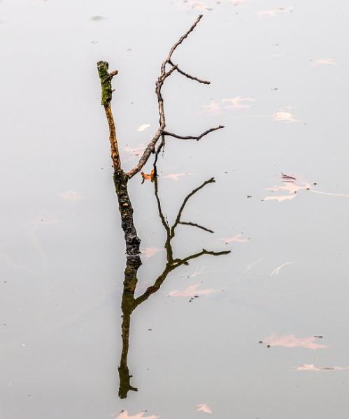 Dry branches in water by rninov