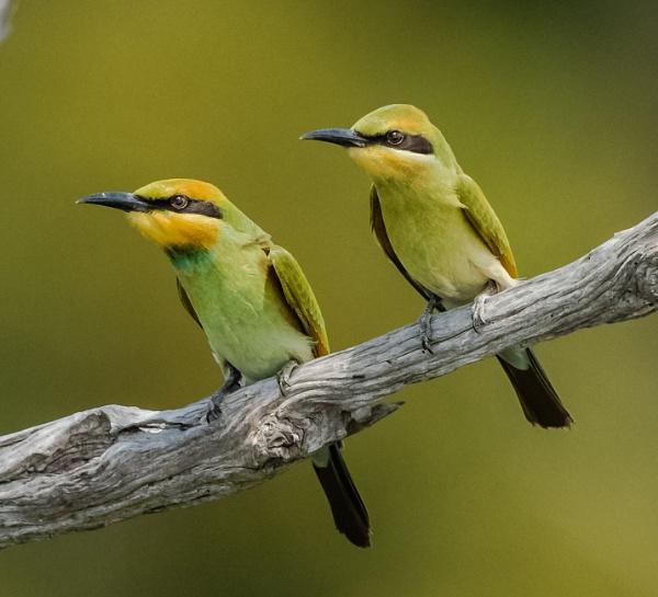Birds of a feather. by Heyneker