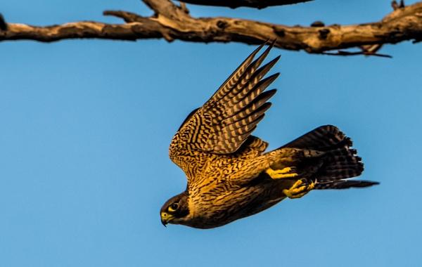 Take off. by Heyneker