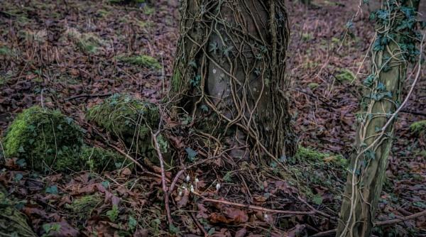 Entanglement by BillRookery