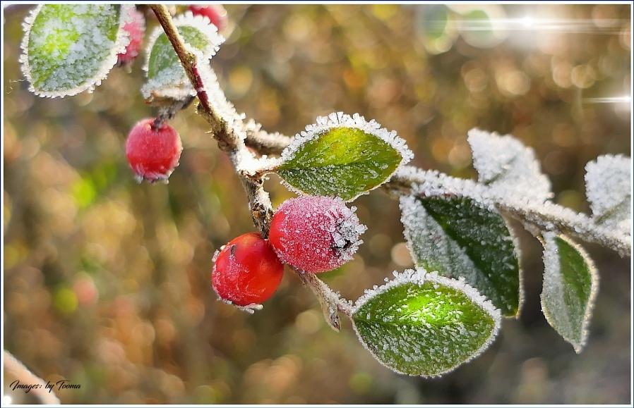 The Art of Winter - 5.