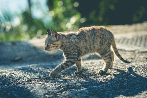 Catwalk by Bp122