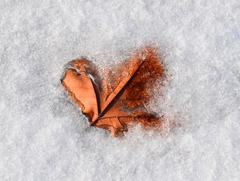 Snow, Ice and The Leaf