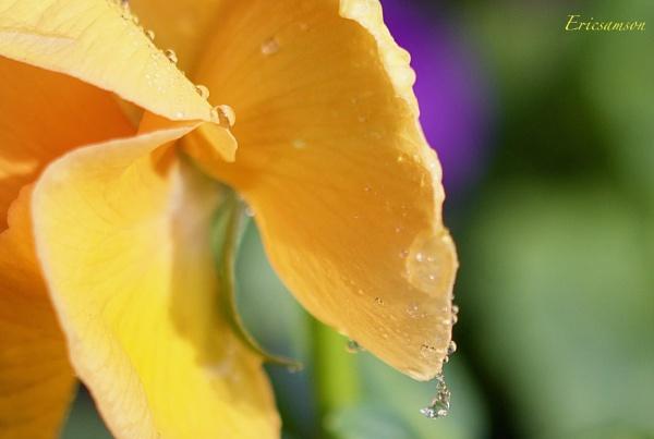 Droplets 2 by Ericsamson
