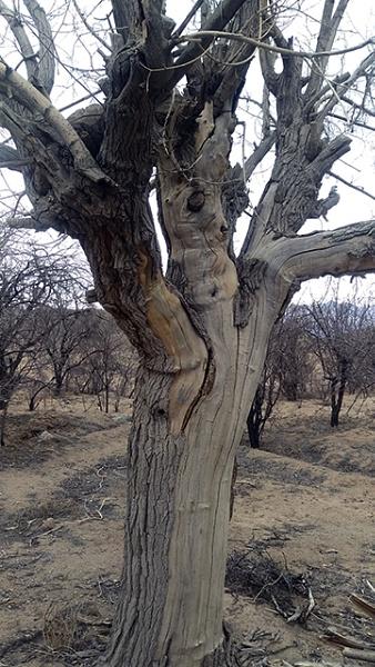 tree by nkargar1356