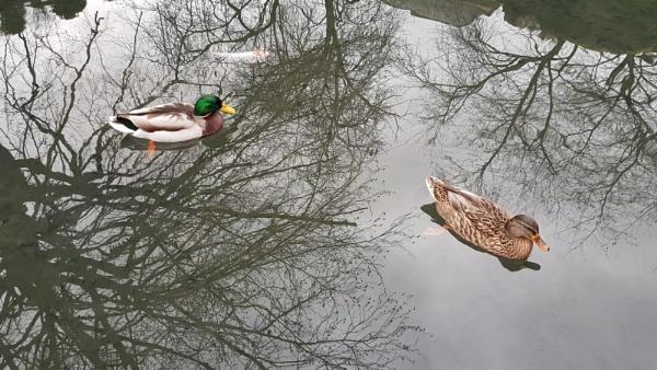 Two Little Ducks by B3DD0W5
