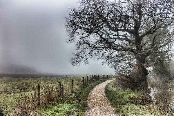 Foggy walk by frenchie44