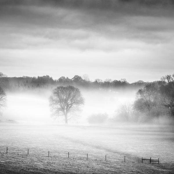Misty morning by barrywebb