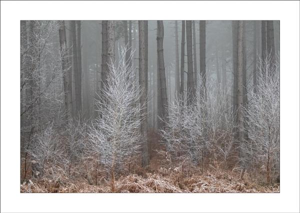 Hoar Frost by Steve-T