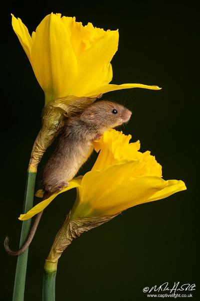 A Taste Of Spring by Miles Herbert